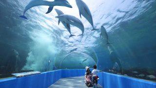 【最大750円割引】のとじま水族館の割引券を入手する