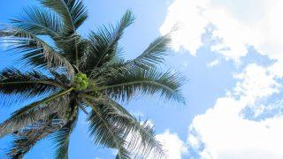 【最大半額】海辺の果樹園 日帰り入浴・プール 料金の割引情報