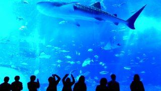 【最安値情報】沖縄美ら海水族館 入館料金を割引にするには