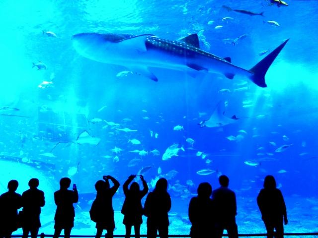 沖縄美ら海水族館割引券